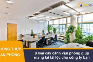 9 loại cây cảnh văn phòng giúp mang lại tài lộc cho công ty bạn