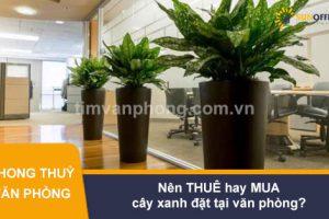 Nên thuê cây xanh đặt tại văn phòng hay mua trọn gói?